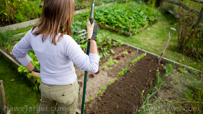 Image: The revolution is in your back yard: Become self-sufficient and start a home garden