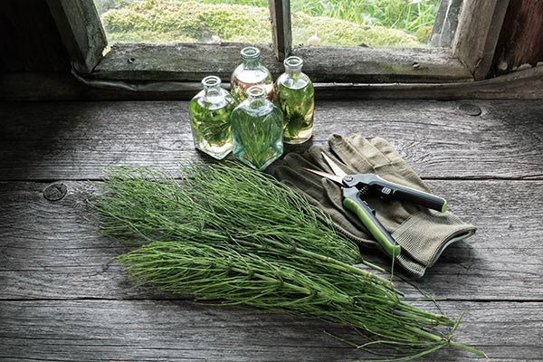 Herbs and bone health: Is horsetail an effective natural remedy for