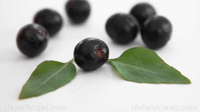 Image: 5 Health benefits of acai berry that make it a real superfood