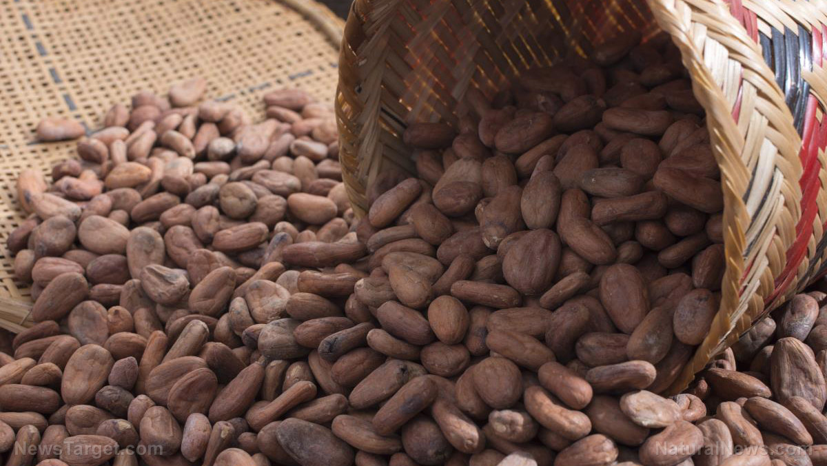 Image: The best way to boost the health benefits of cocoa beans lies in how you roast them