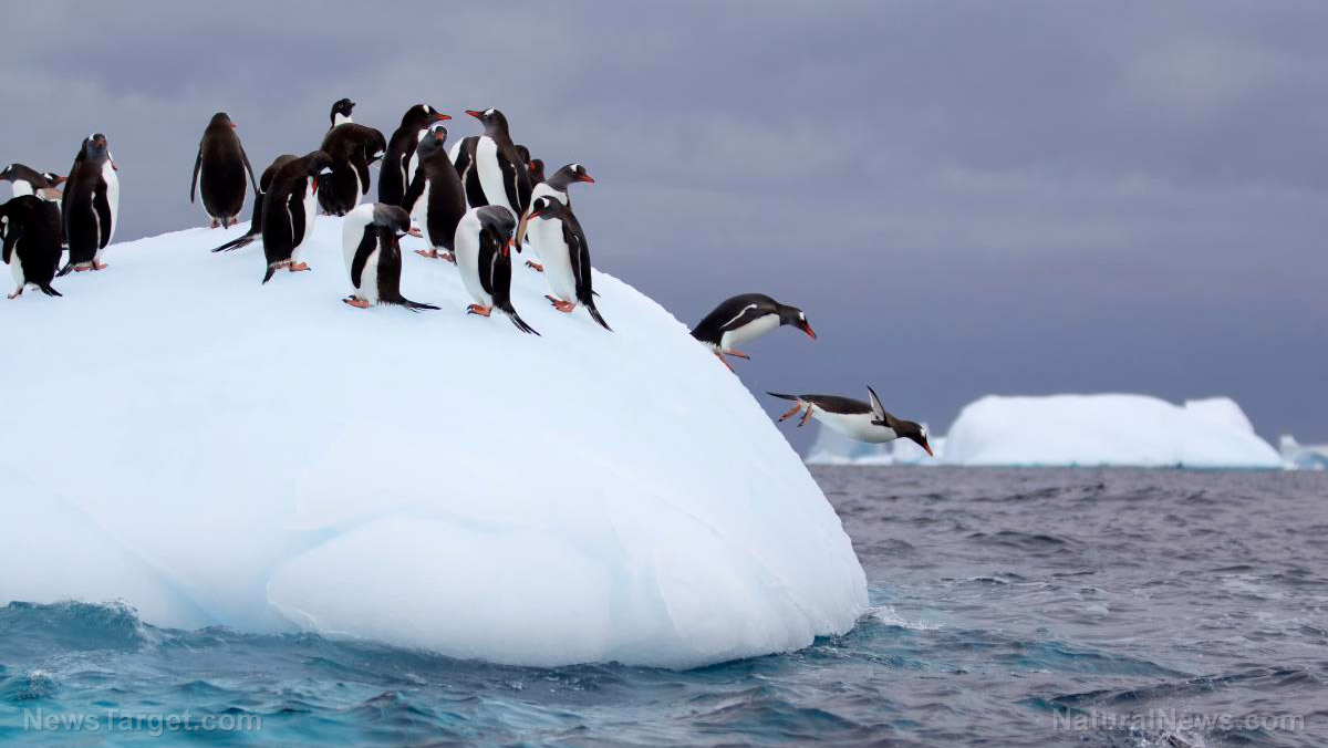 After dropping polar bears because their populations are actually booming, loony leftists now claim penguins are gay and being killed by the climate, Totalrehash.com