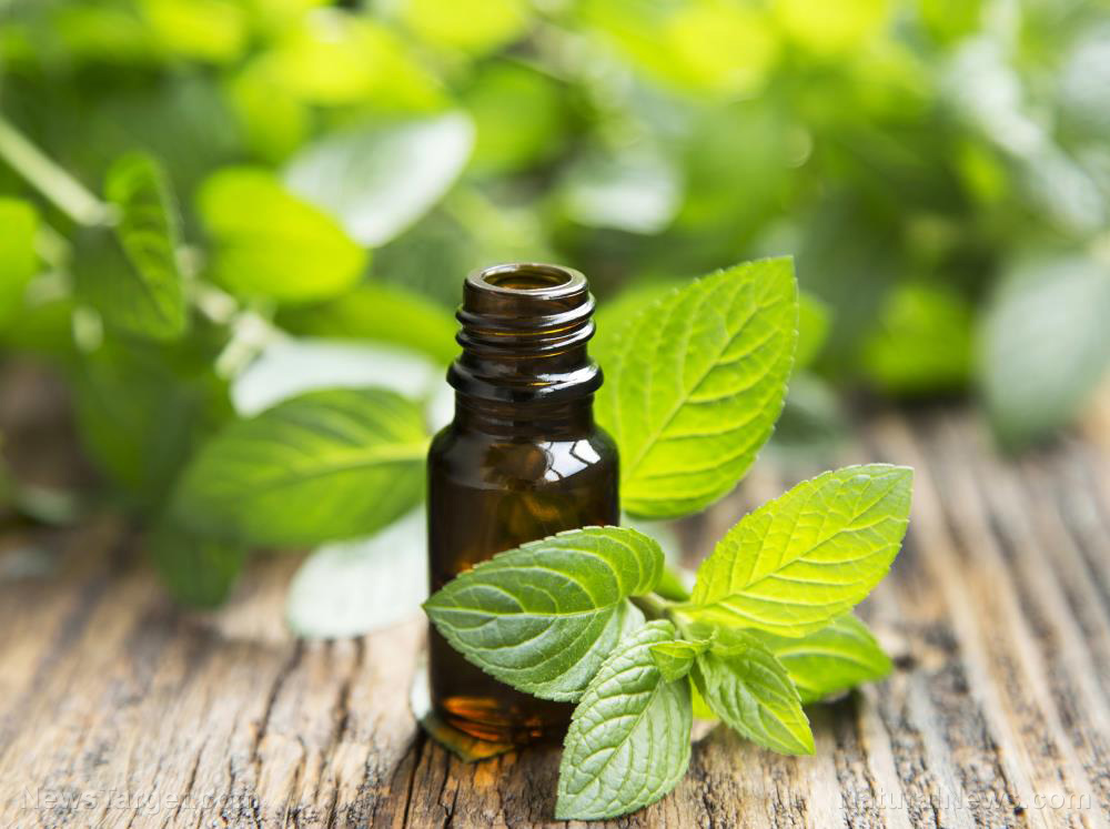 Image: Minty relief: Peppermint oil can be used to address esophagus disorders, suggests study