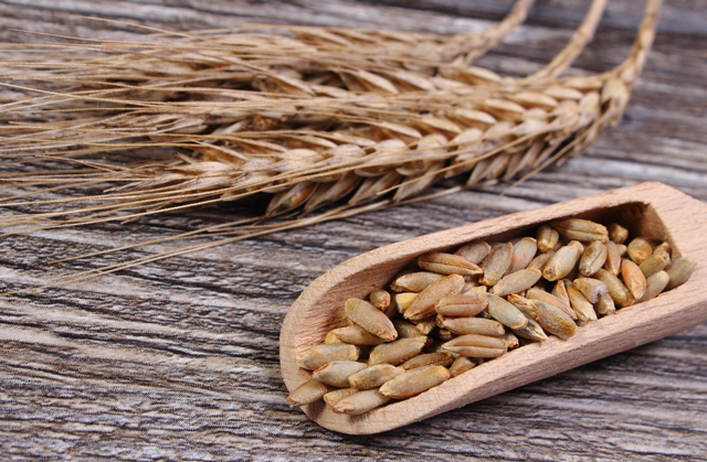 Image: Whole grain rye shown to boost gut health