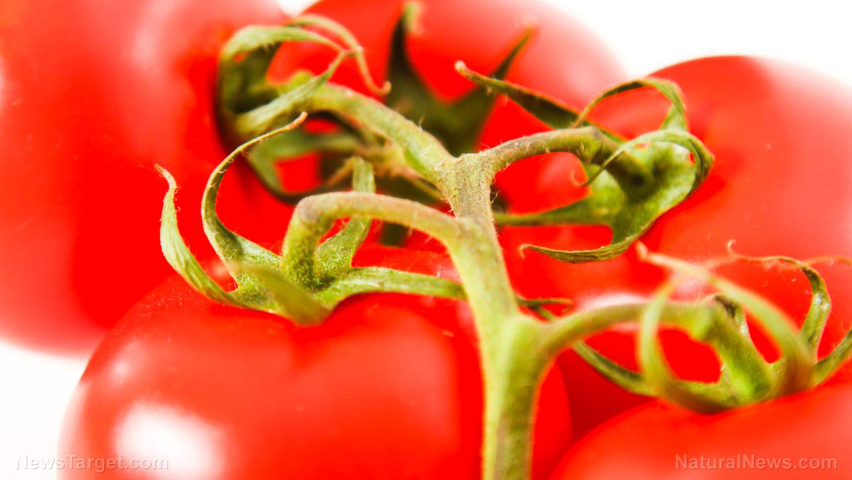 Image: Declared a vegetable by the Supreme Court, tomatoes are a world-wide staple with many widely known health benefits