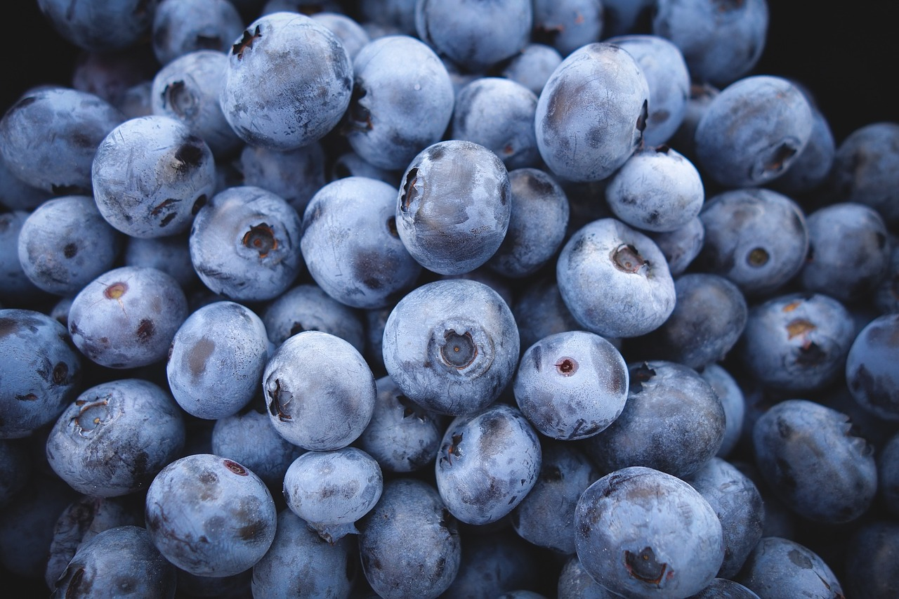 Image: Incredible study reveals polyphenols in blueberries INCREASE physical activity and REDUCE body weight gain in animal subjects