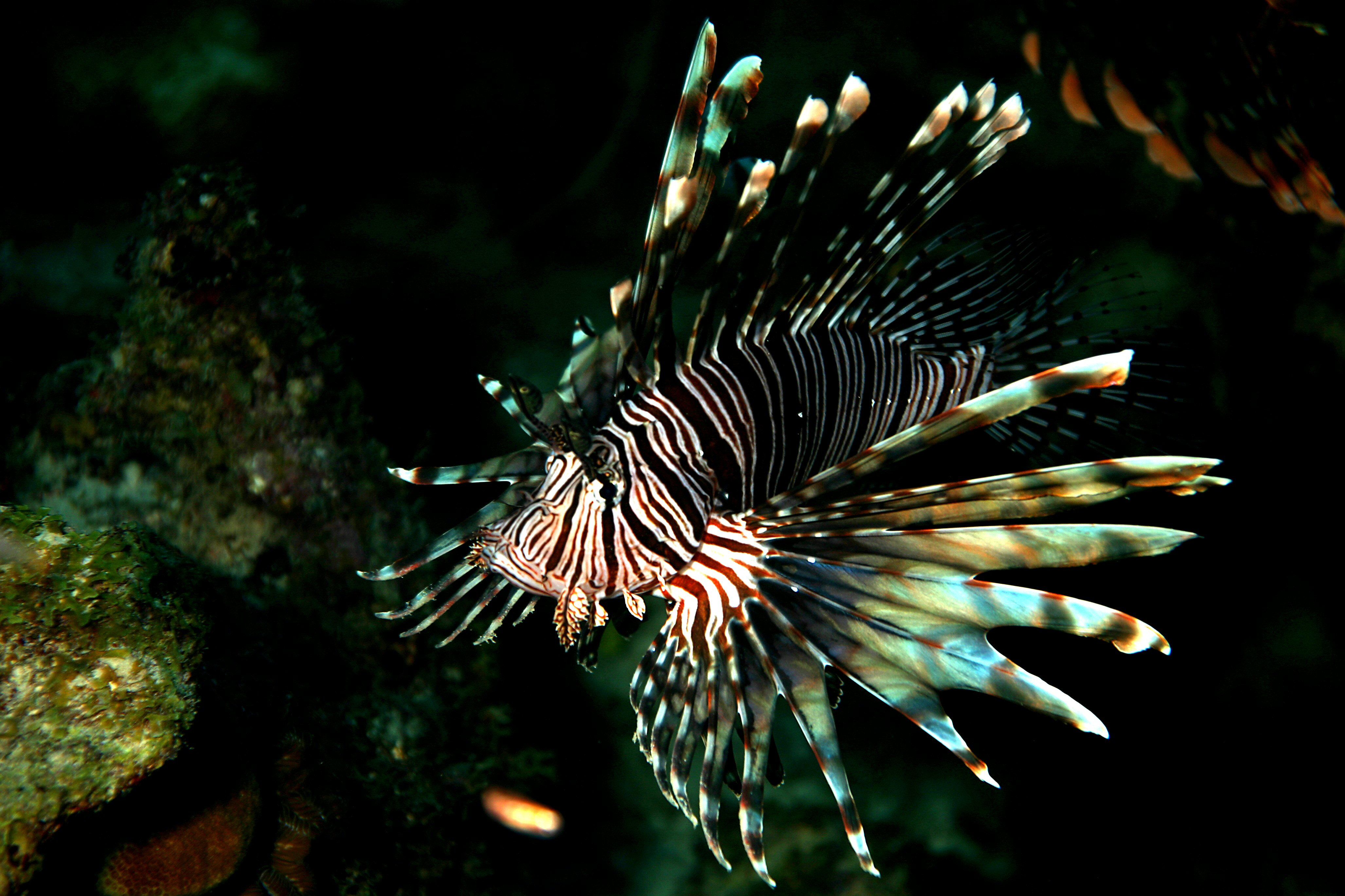 Image: Updating fluid-powered machines: Scientists design bizarre-looking lionfish powered by a blood-like compound