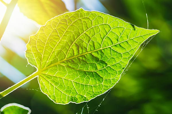 Image: Scientists are getting closer to creating artificial photosynthesis with new dual-atom catalyst which will help them harvest solar energy