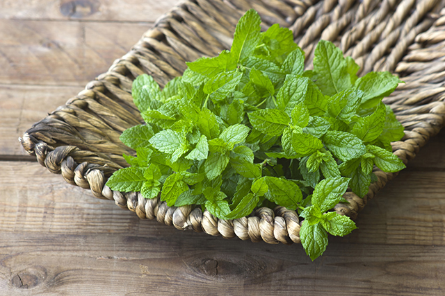Image: Spearmint confirmed to improve cognitive health: Study