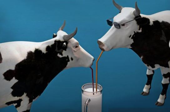Image: Milk being dumped while shortages of other food and grocery items abound