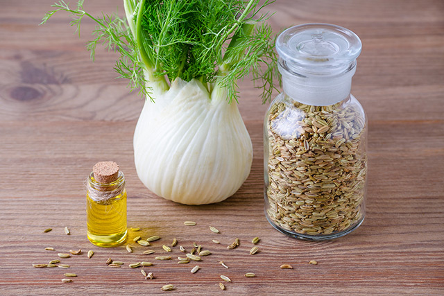 Image: Fennel oil found to have antifungal activity against Candida albicans