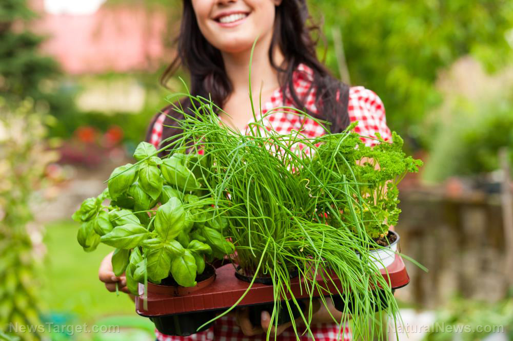 Image: 10 Best herbs to plant on your kitchen windowsill