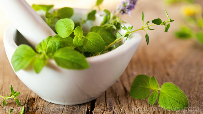 Image: Natural disease prevention: 4 Herbal remedies for UTIs