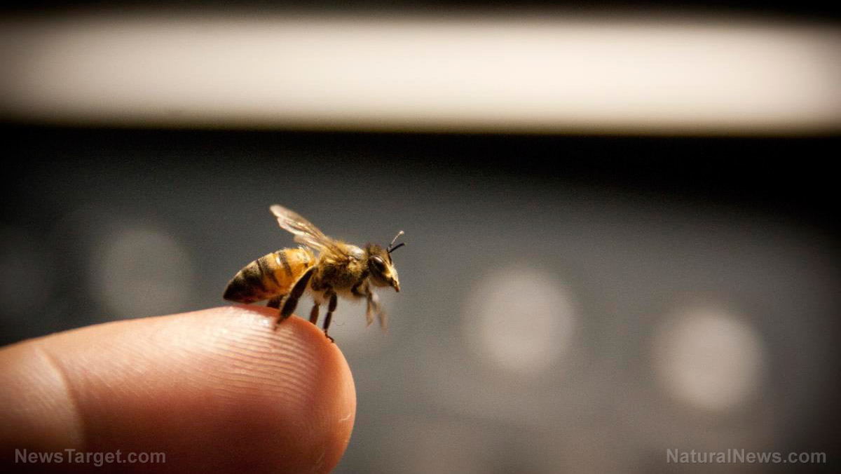 Image: Compound in honey bee venom found to destroy cancer cells within 60 minutes
