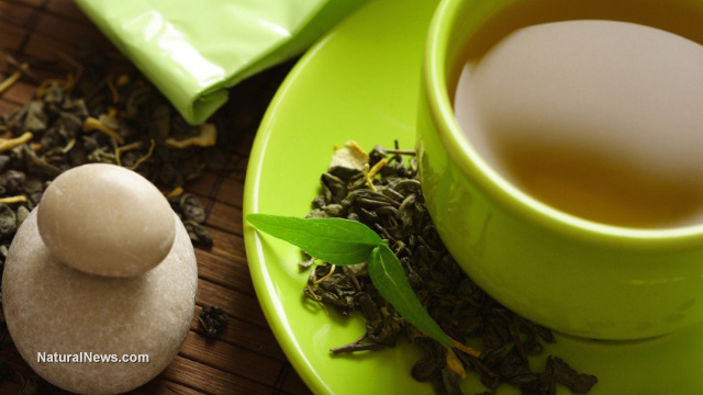 Image: Researchers investigate green tea compounds that may help resolve antibiotic resistance