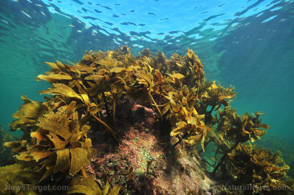 Image: Antimicrobial compound in seaweed can be used to develop self-cleaning surfaces, new research finds