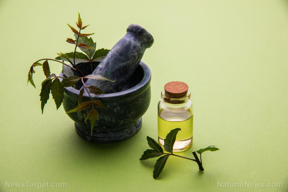 Image: Use antioxidant-rich neem oil to address skin conditions like acne and eczema