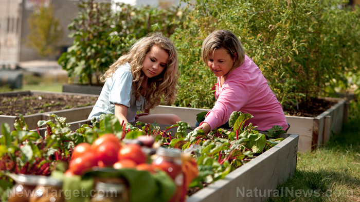 Mother-Daughter-Plant-Permaculture-Home-Garden 3 Ways to save money on your homestead Home & Garden Lifestyle [your]NEWS