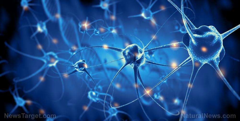 "Image: Do covid vaccines contain GMO ""Magneto"" protein capable of remotely controlling behavior, brain activity?"