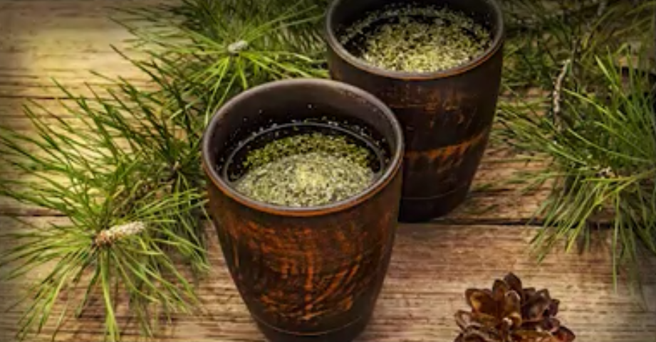 Image: Is pine needle tea the answer to covid vaccine shedding / transmission? Learn about suramin, shikimic acid and how to make your own extracts