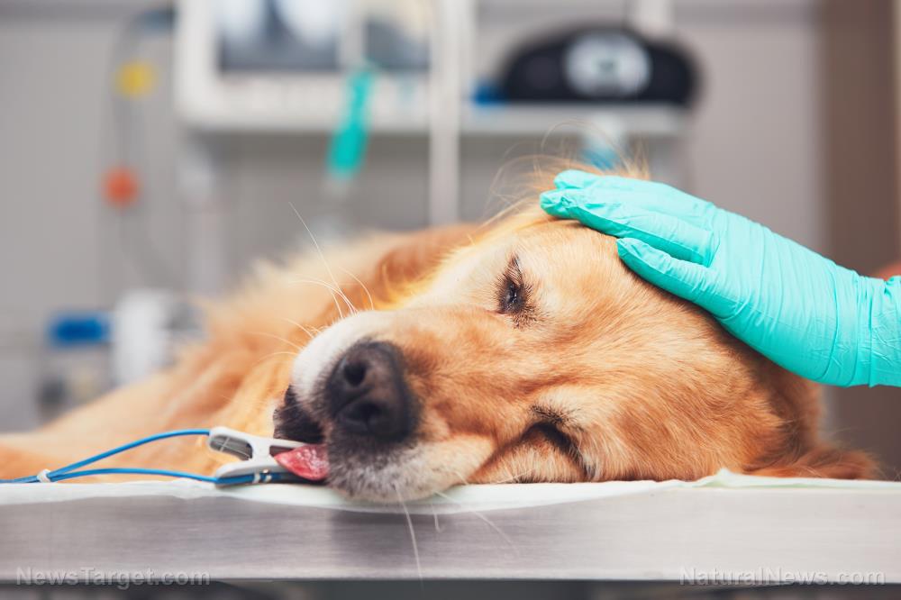 Beliebte Flohhalsbänder werden mit Tausenden von Todesfällen bei Haustieren in Verbindung gebracht und schädigt auch Menschen