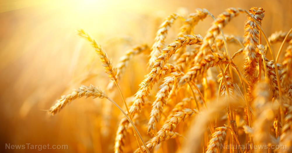 China persecuting agriculture officials to cover up grain shortages