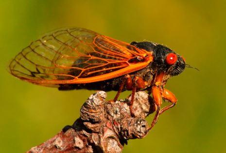 """Bild: Counterfeit News Network (CNN) wirbt für den Verzehr gefährlicher quecksilberbeladener Zikadenkäfer, die seit 17 Jahren unter der Erde leben, als """"Zukunft der Nahrung"""""""